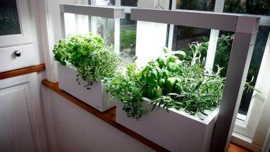 herbs-indoors